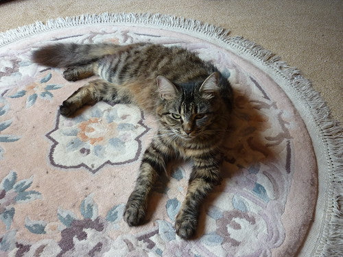 Cat Lying Down On Old Pink Rug