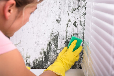A woman with a sponge cleaning mould off a wall, next to a venetian blind