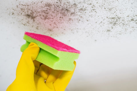 A green and pink sponge cleaning mould off a wall