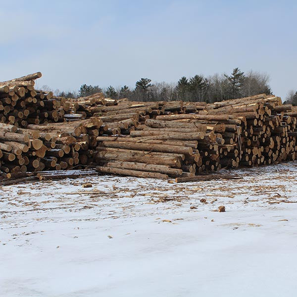 Tree In Town Lumber Millwork And White Cedar Retailer In