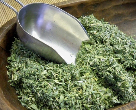 Alfalfa herb from Glenbrook Farms Herbs and Such