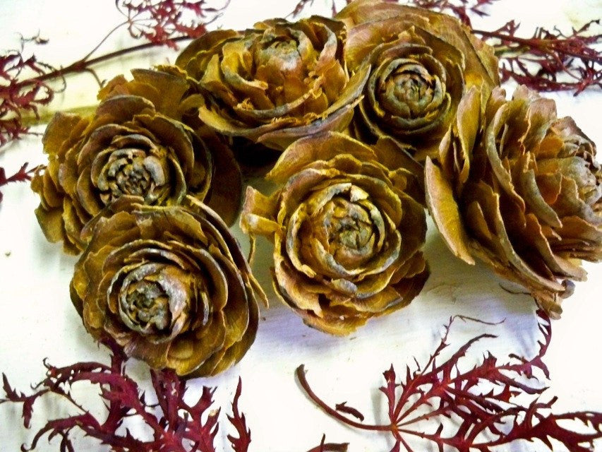 Cedar Roses from Glenbrook Farms Herbs