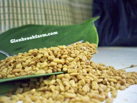 Fenugreek Seed from beautiful www.glenbrookfarm.com