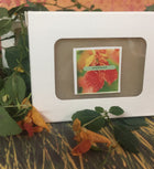 bar of jewel weed soap