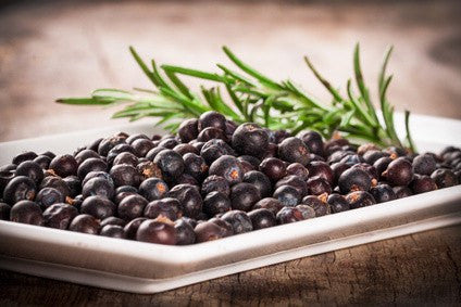 Juniper Berries from Glenbrook Farms Herbs