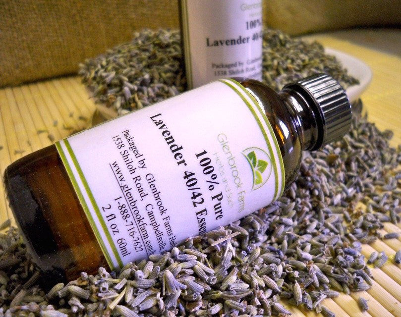 lavender essential oil from glenbrookfarm.com