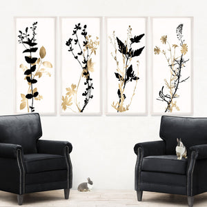natural curiosities black and white herbarium series room view