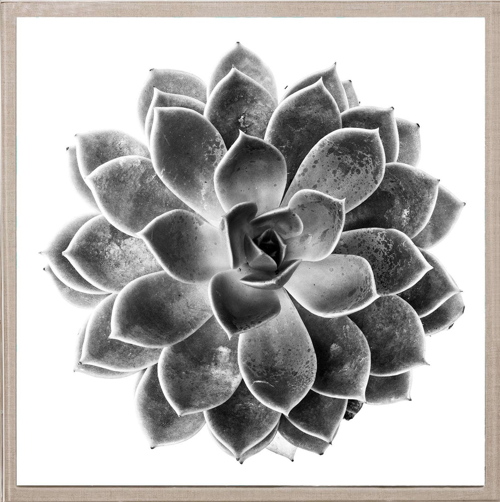 Natural Curiosities Black And White Succulent 1