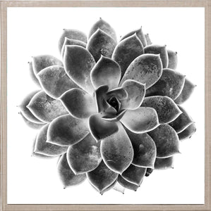 Natural Curiosities Black and White Succulent 1 Artwork