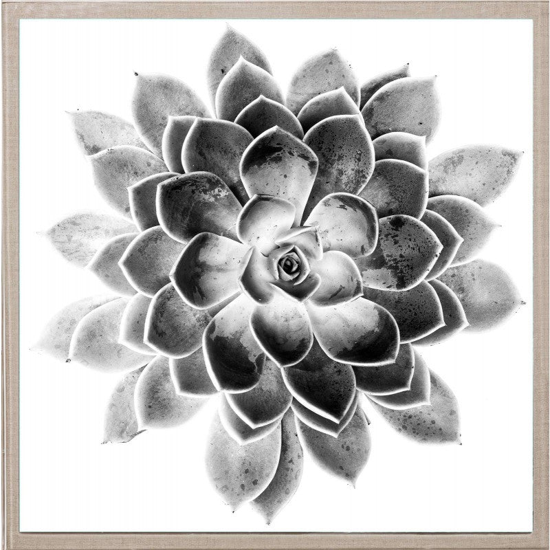 Natural Curiosities Black And White Succulent 2