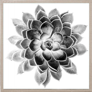 Natural Curiosities Black and White Succulent 2 Artwork