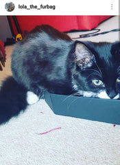 gracie-cat-box-goth