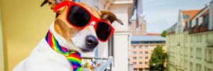 Rebelious Adolescent Dog in Sunglasses