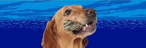 Dog with fish skin in mouth and ocean graphic behind