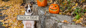 Cute dog holding trick or treat sign at halloween