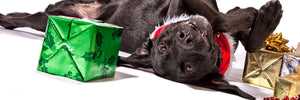 Keeping Your Dog Happy and Healthy This Holiday Season