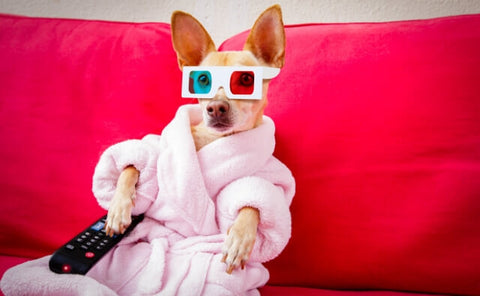 Dog watching TV wearing 3D Glasses