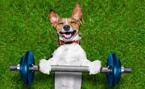 Dog training with weights