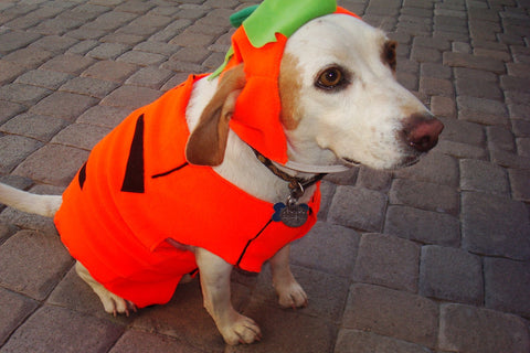 Think twice about dressing your dog in costume
