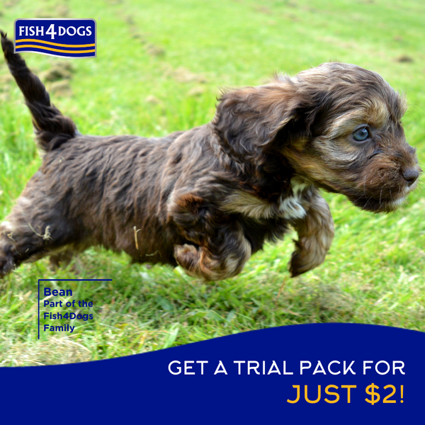 Puppy food trial pack