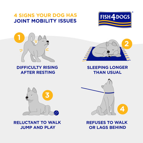 4 signs of joint problems in senior dogs
