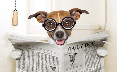 Puppy on toilet reading newspaper