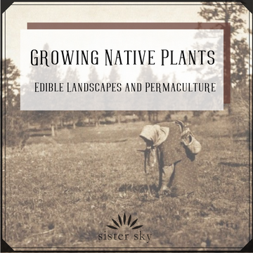 Growing Native Plants - Edible Landscapes and Permaculture