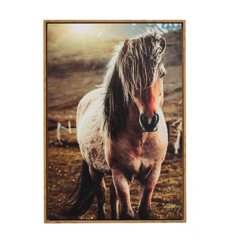 Lone Pony Canvas
