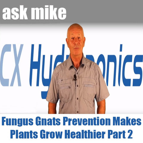 Ask Mike Fungus Gnats Prevention Makes Plants Grow Healthier Part2