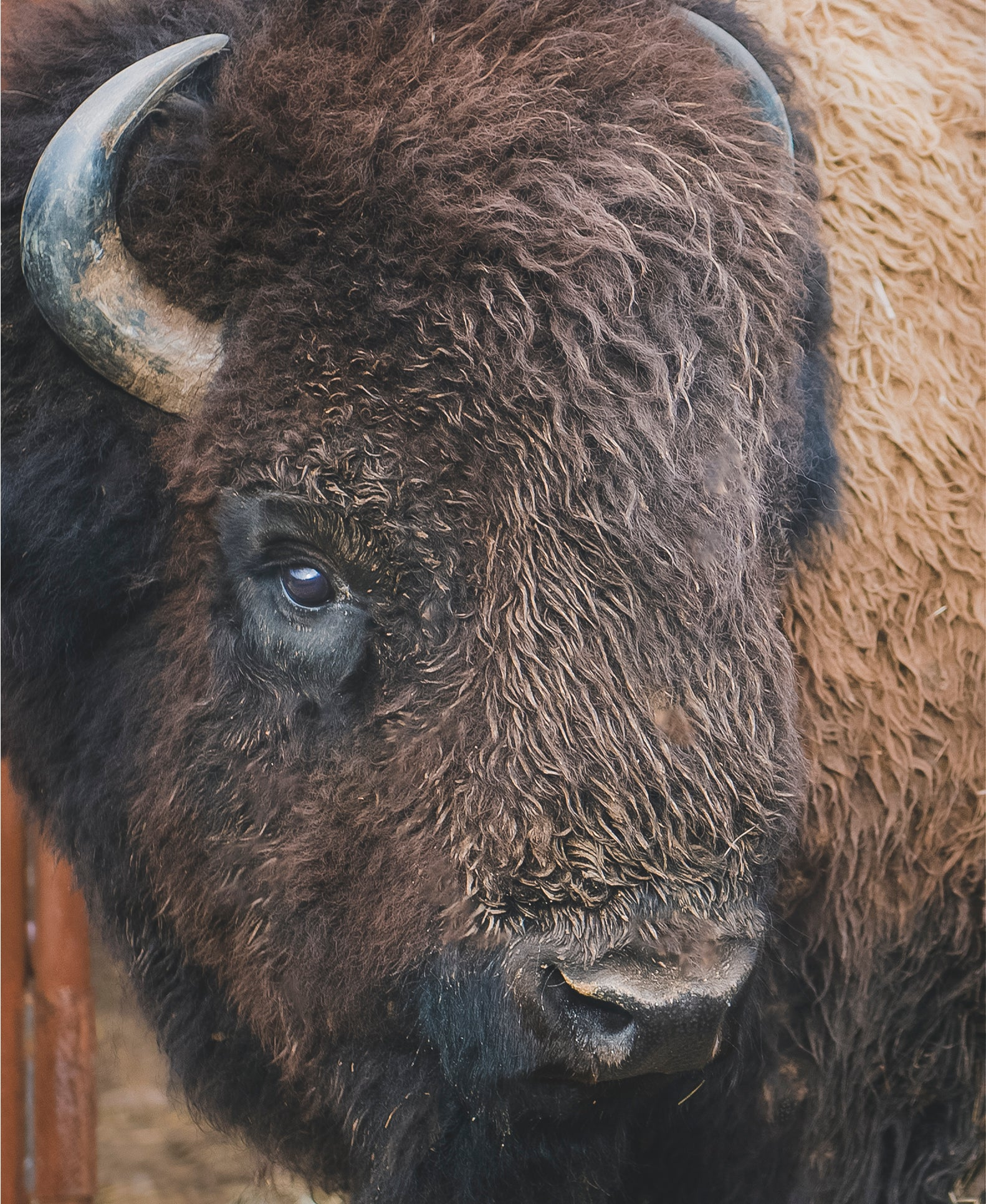 Our bison love their NJ farm...and treats!