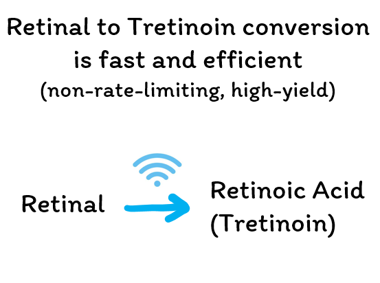 Retinal to Tretinoin conversion is fast and efficient