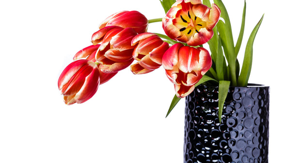 Flowers Care for Droopy Tulips