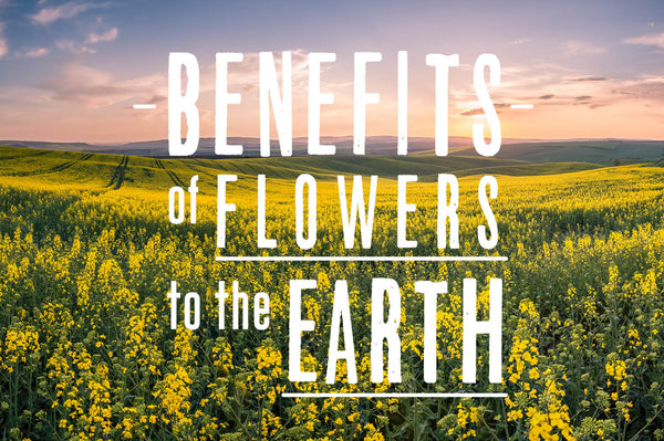 Earth Day - Benefits of flowers to the earth
