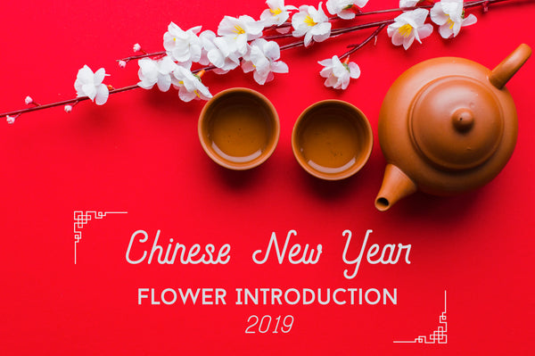 Chinese New Year Flower Introduction