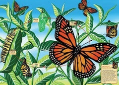 Life Cycle Of A Monarch Butterfly - 48 Piece Floor Puzzle
