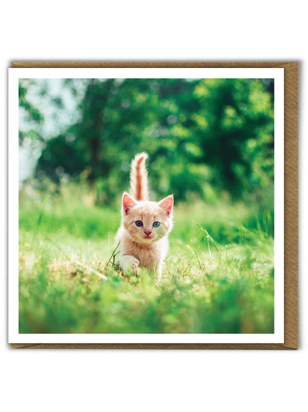 Exploring Kitten Card