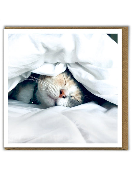 Sleeping Kitten Card