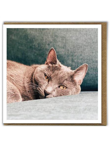 Sofa Cat Card