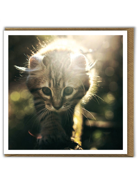 Sunshine Kitten Card