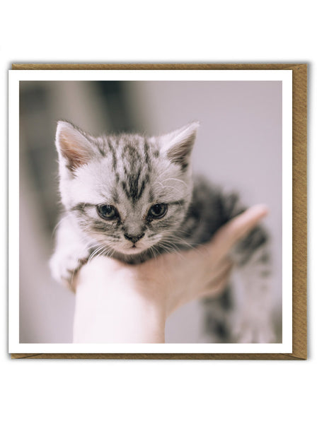 Kitten Handful Card