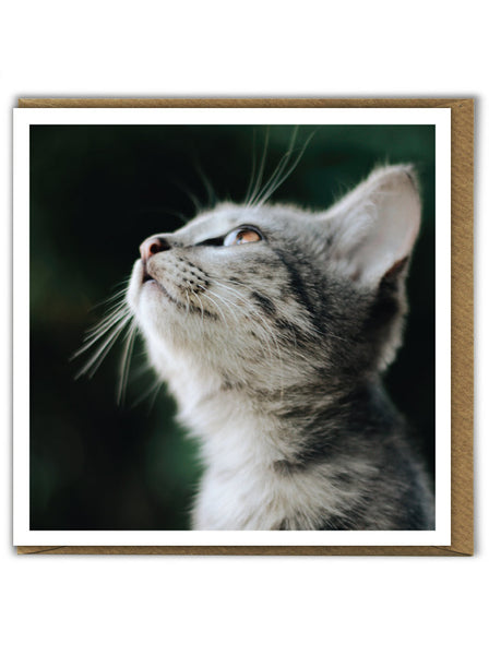 Kitten Looking Up Card