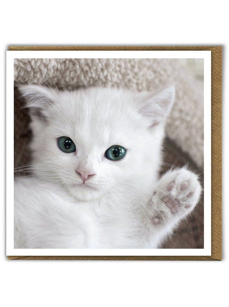 Waving Kitten Card