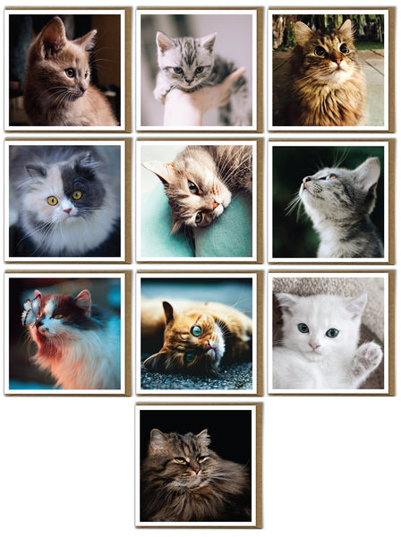 Cute Cats and Kittens Multipack of 10 Greeting Birthday Cards