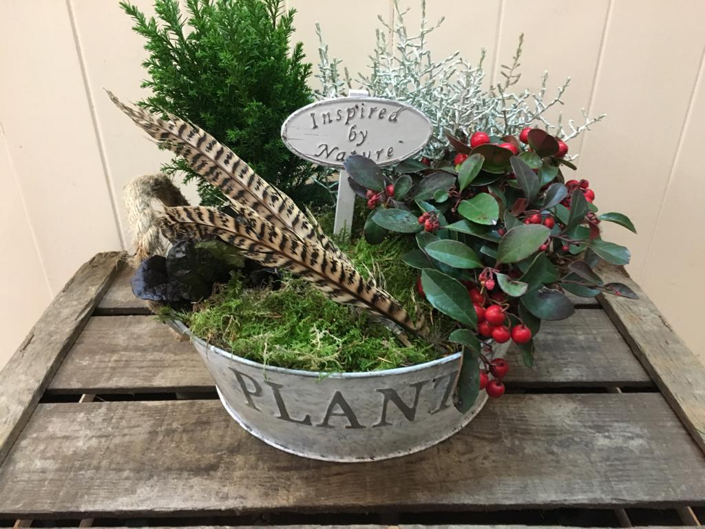 Cottage Garden Plant Arrangement - Helens Flowers Grantham