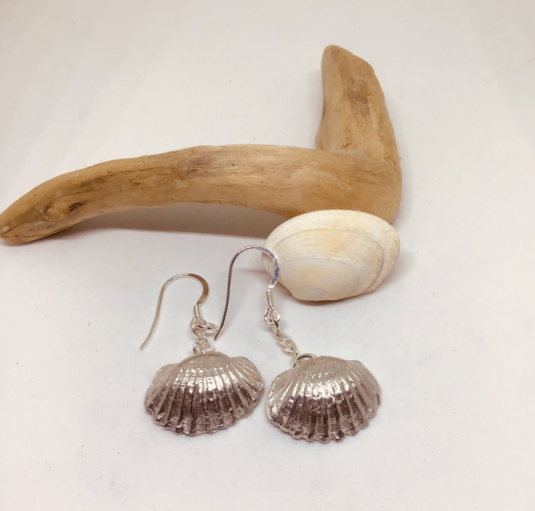 Silver Cockle Shell Earrings