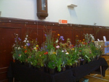 Perennials at  Haddington Charity Sale