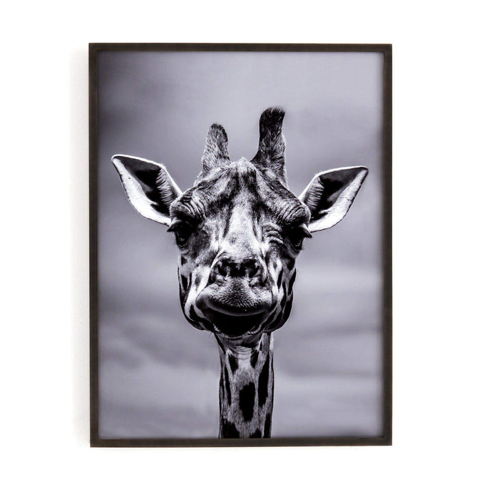 Giraffe Black and White Photography - Art Studio Collection - Parker Gwen