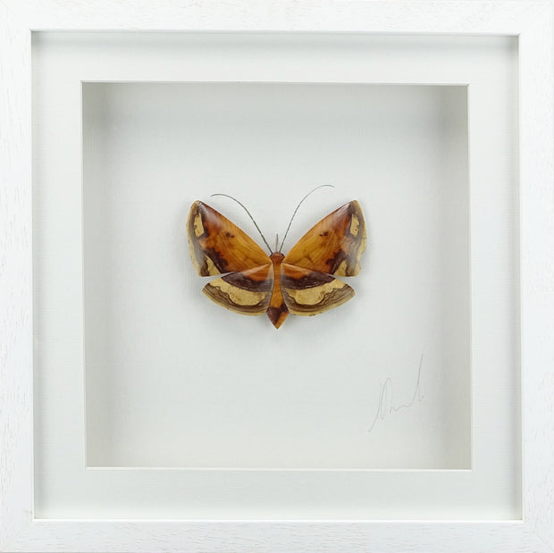 Copy of Small Single Yew Moth - (Frame size 390 x 390) No.4b