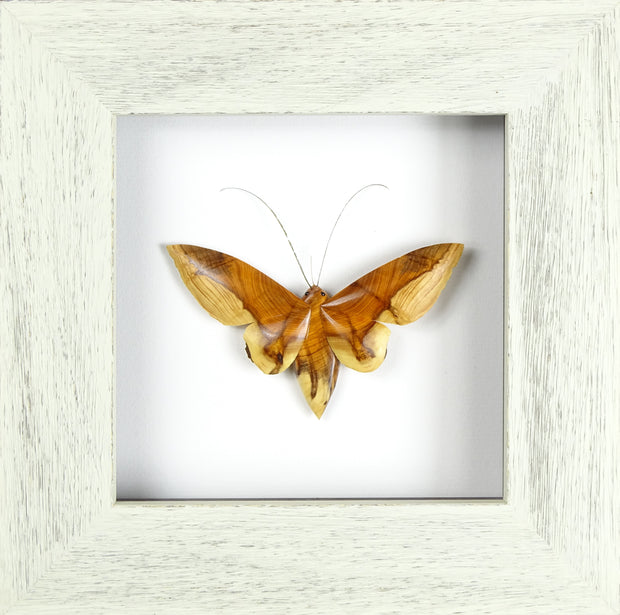 Small Single Moth - Yew  (Frame size 230 x 230) No.3b