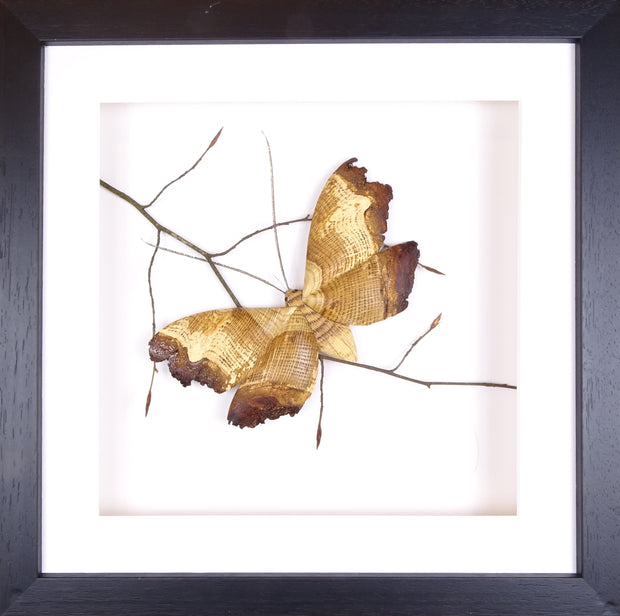 Single Moth on a Branch AVAILABLE NOW!